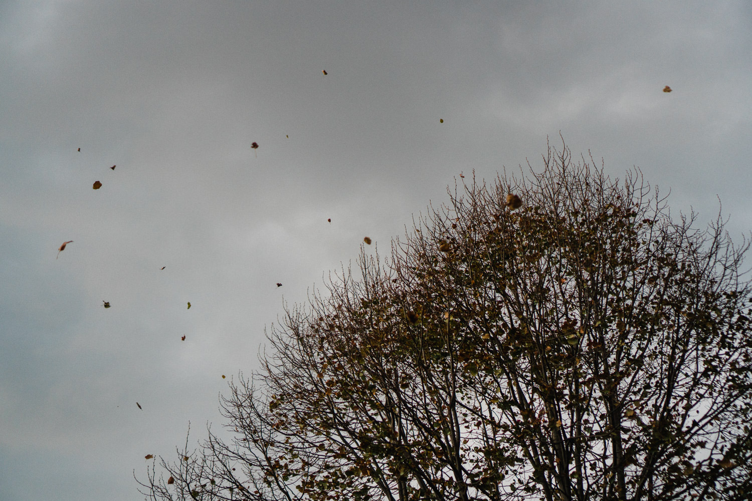 Leaves flying off a tree.