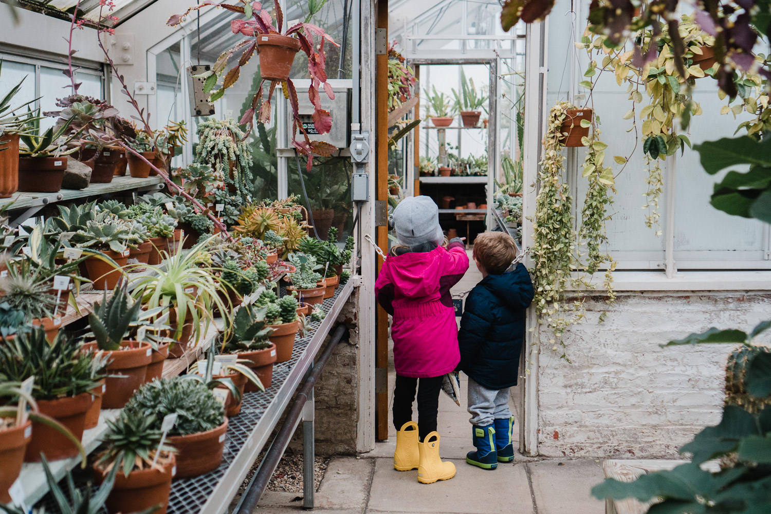Kids look at the plants in the greenhouse at Planting Fields.