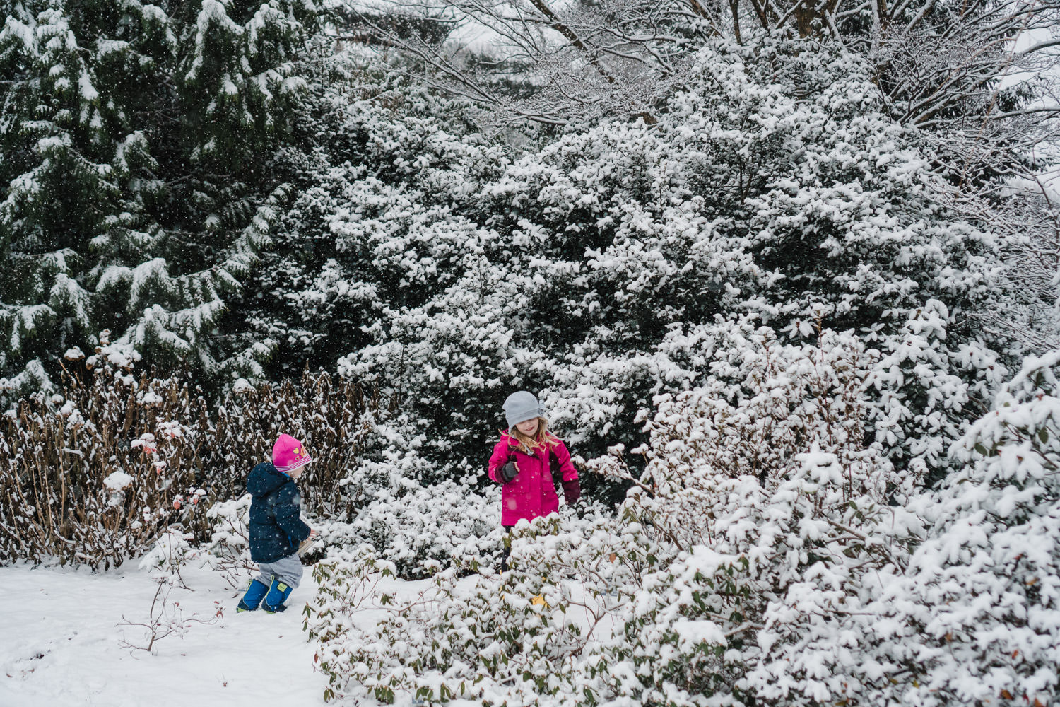 Kids walk through snowy bushes at Planting Fields.