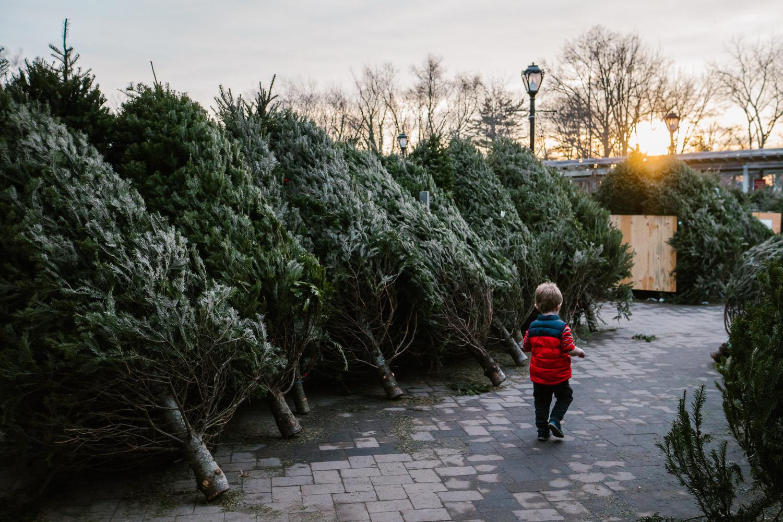 A little boy walks by Christmas trees at Hicks' Nursery.