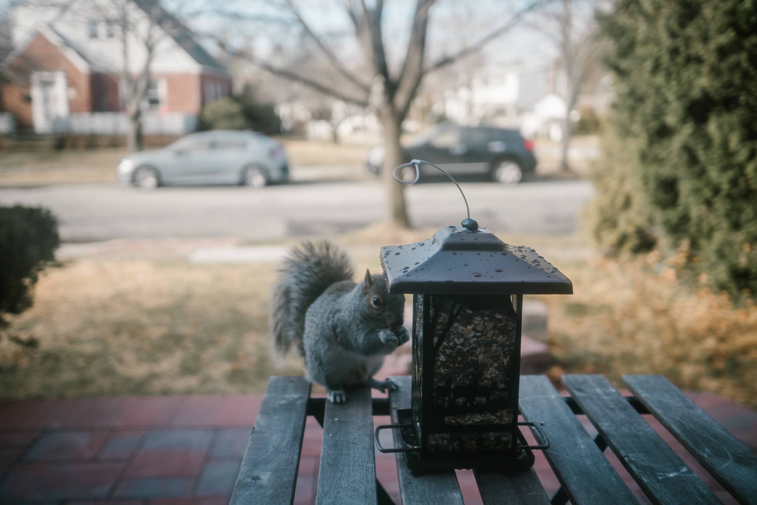 A squirrel eats from a bird feeder.
