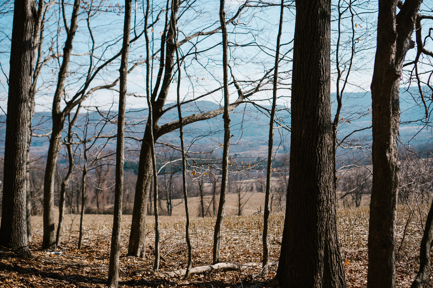 A wooded area in the Berkshires.