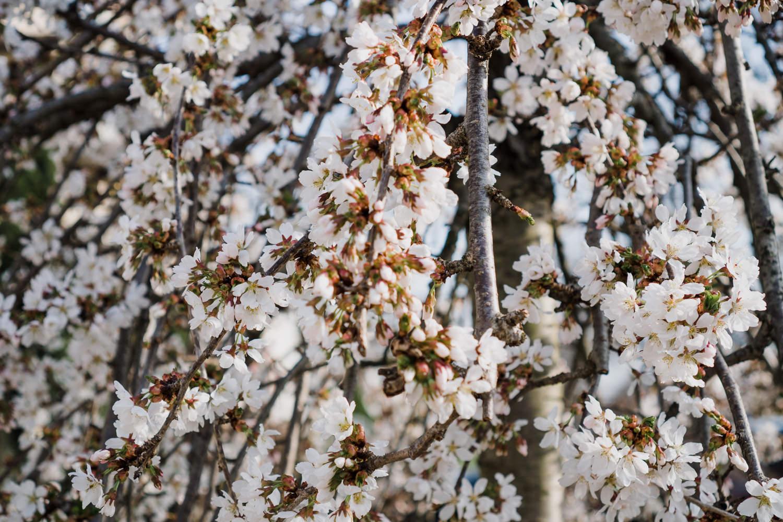 A tree blossoms.