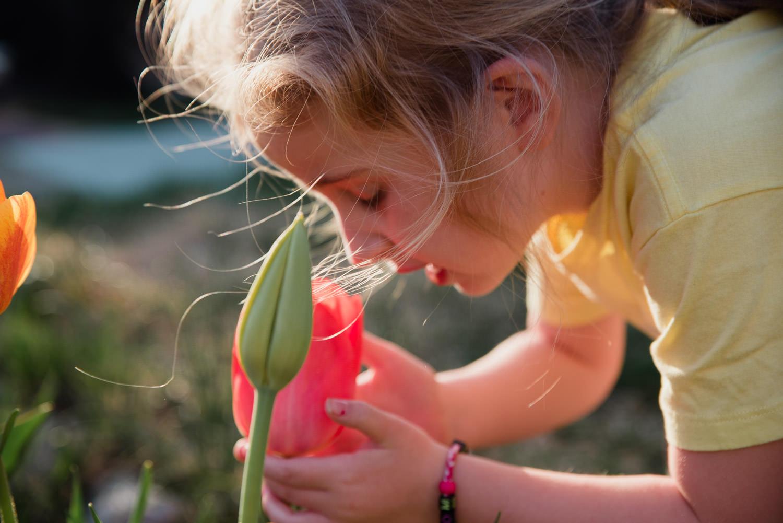 A little girl smells a tulip.