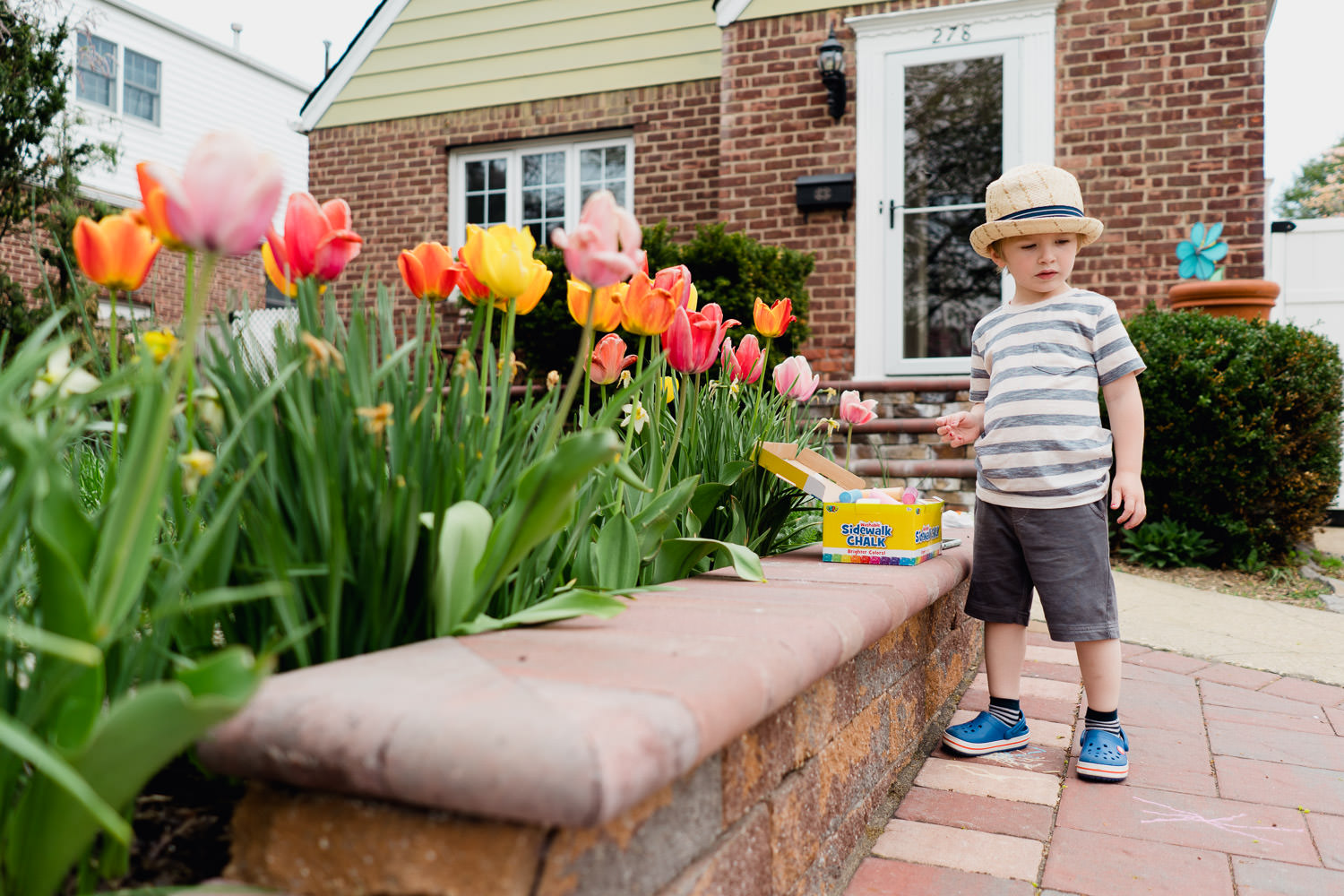 A little boy stands in front of some tulips in a front yard.