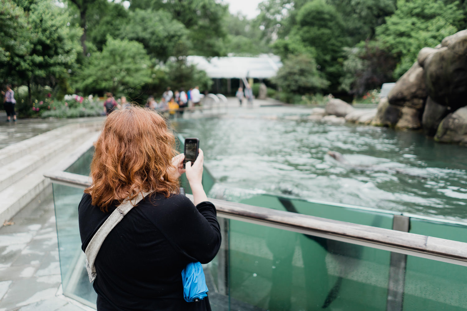 A woman watches the sea lions at the Central Park Zoo.