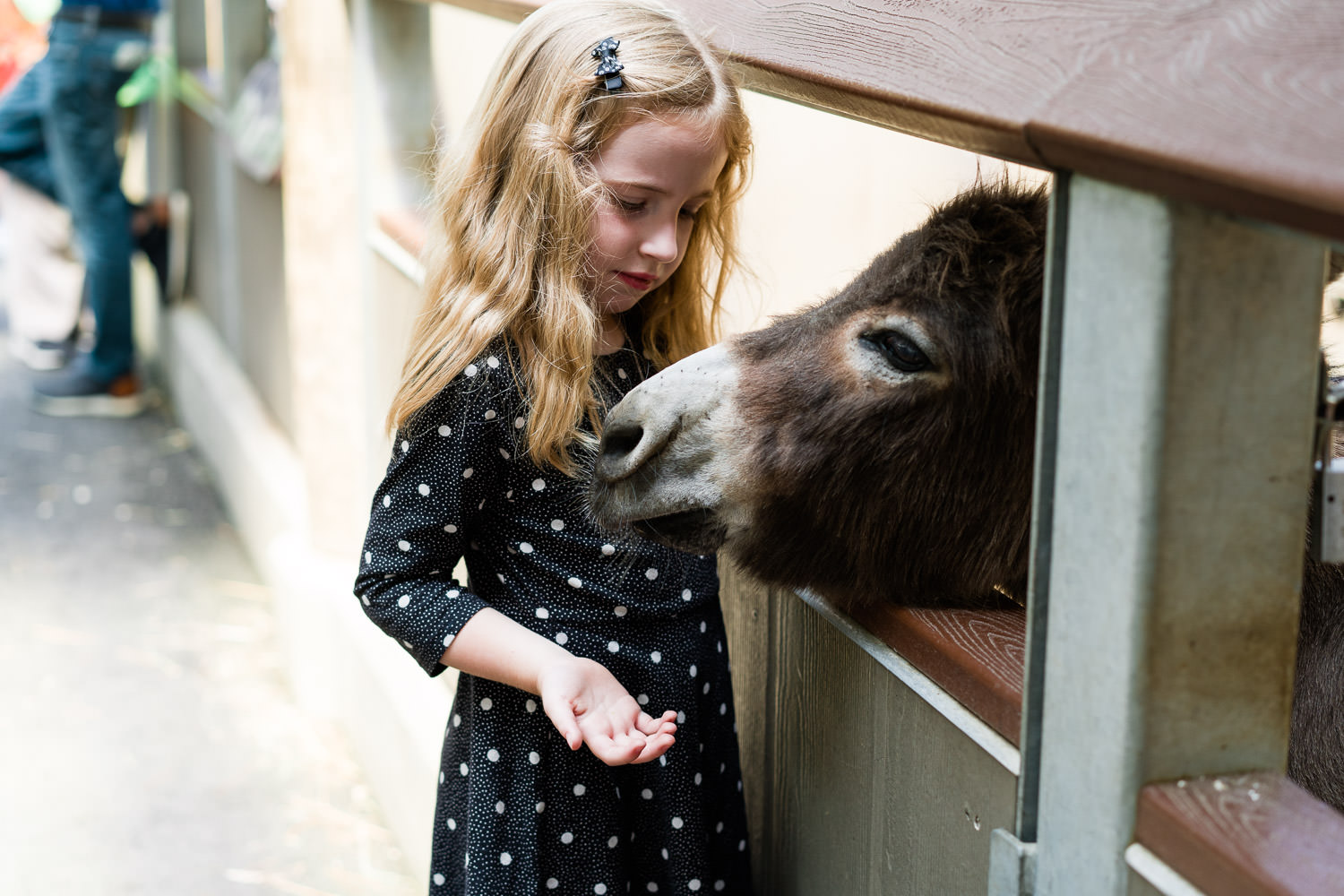 A little girl pets a donkey at the Bronx Zoo.
