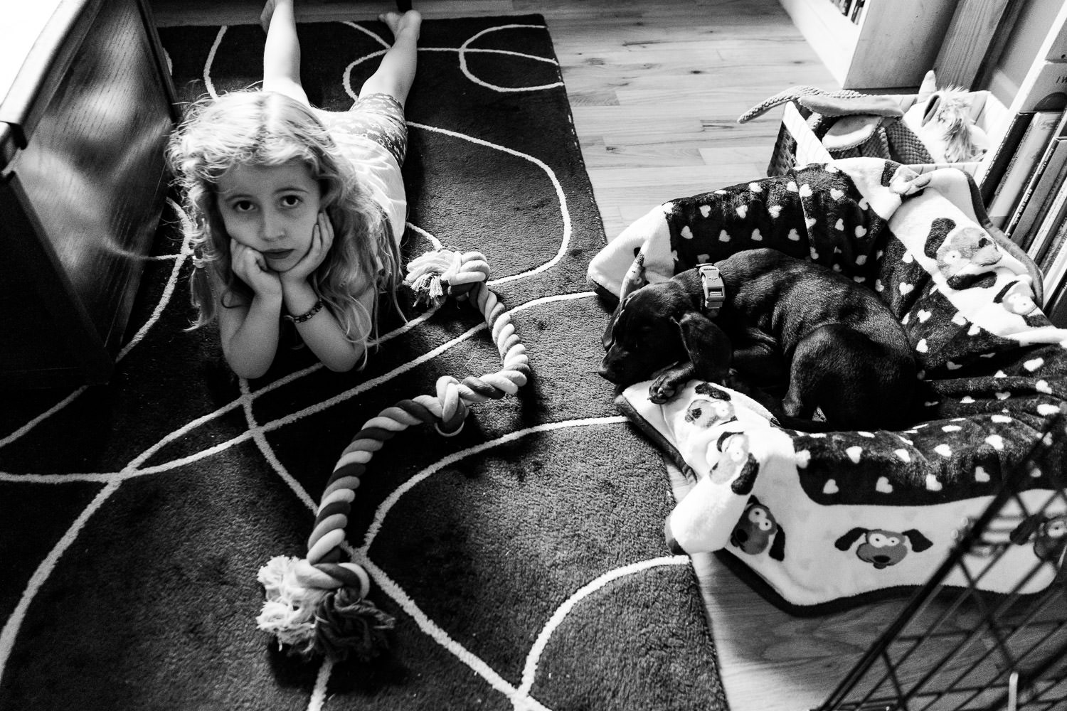 A little girl sits next to a black lab puppy in a living room.