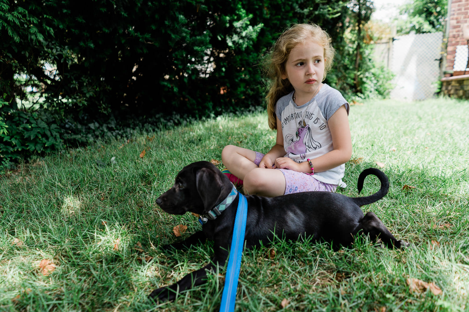 A little girl sits on a lawn with a black lab puppy.