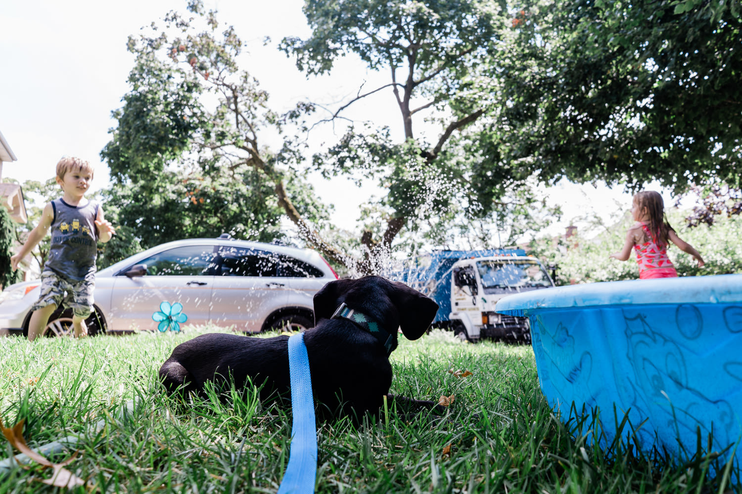 A dog watches two kids playing in the sprinkler.