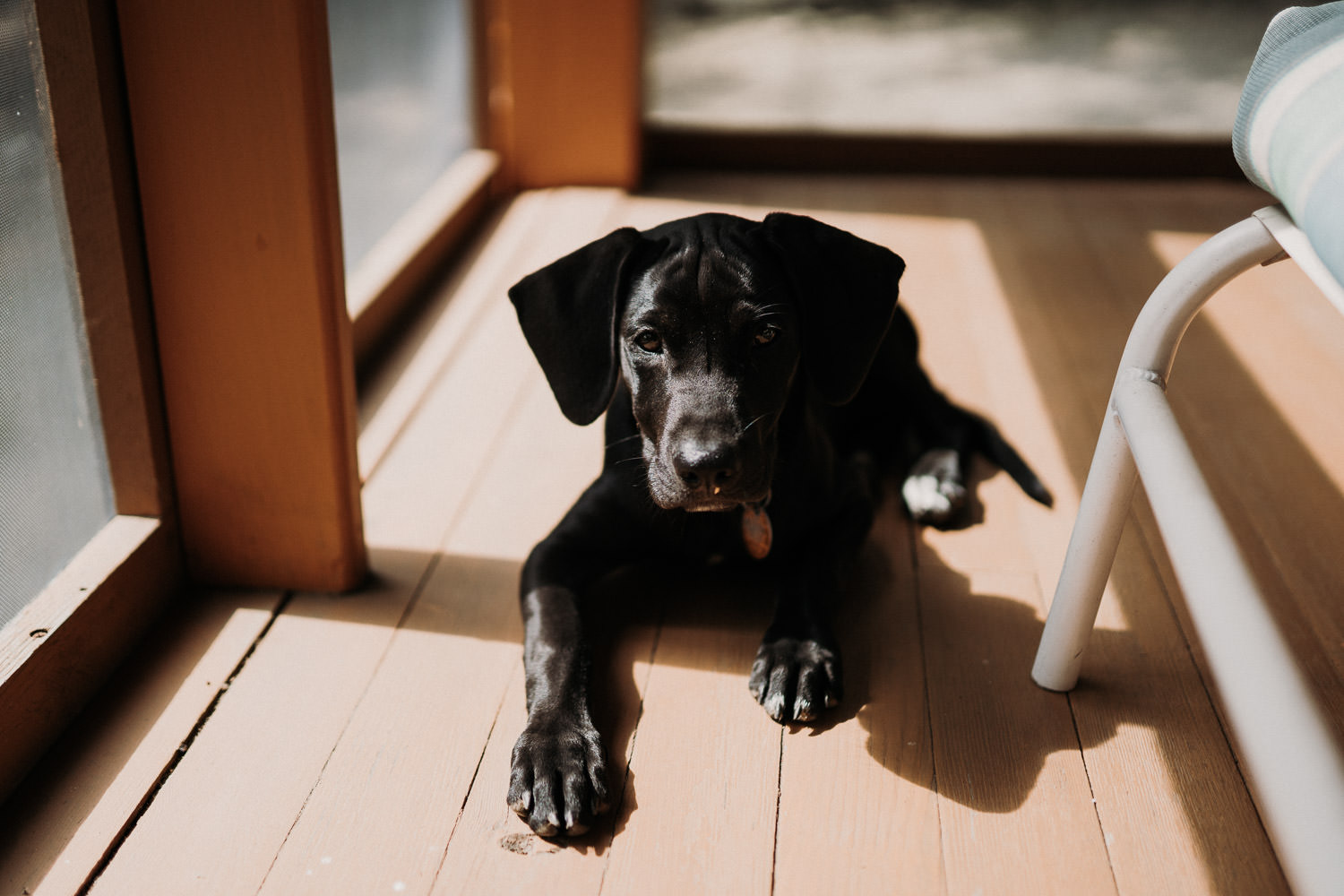A dog sunbathes on the porch.