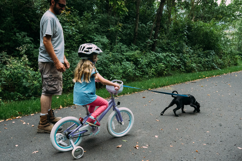 A dog pulls a little girl on her bike.