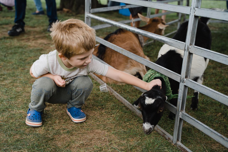 A little boy pets a goat at Sands Point Preserve.
