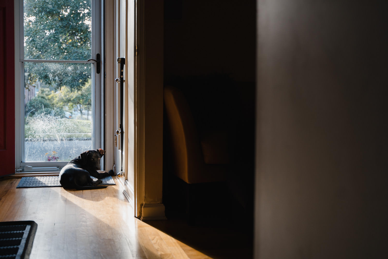 A dog sits by the front door.