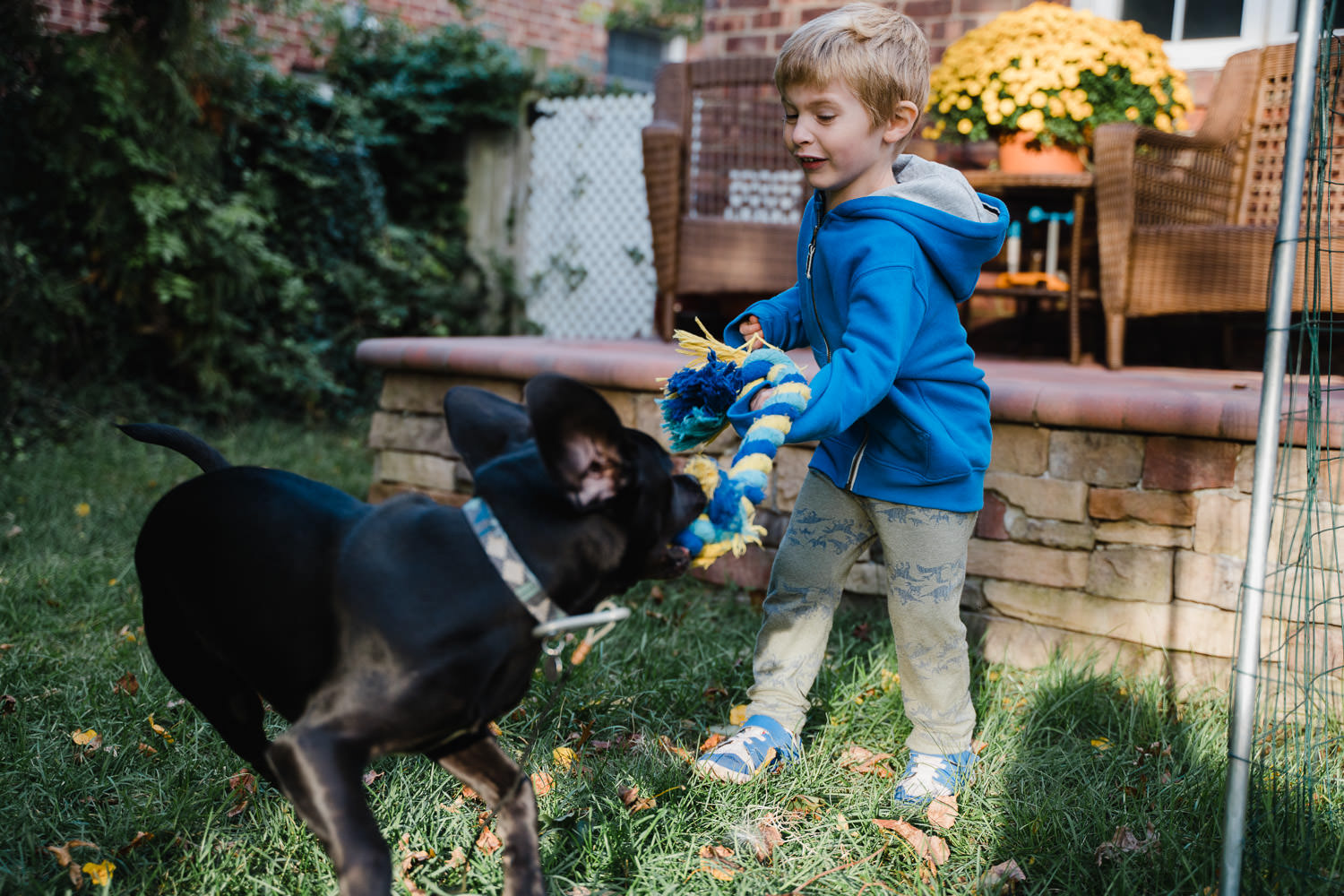 A little boy plays with his dog.