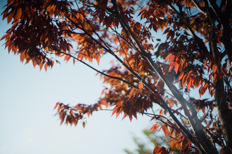 Pretty fall leaves.