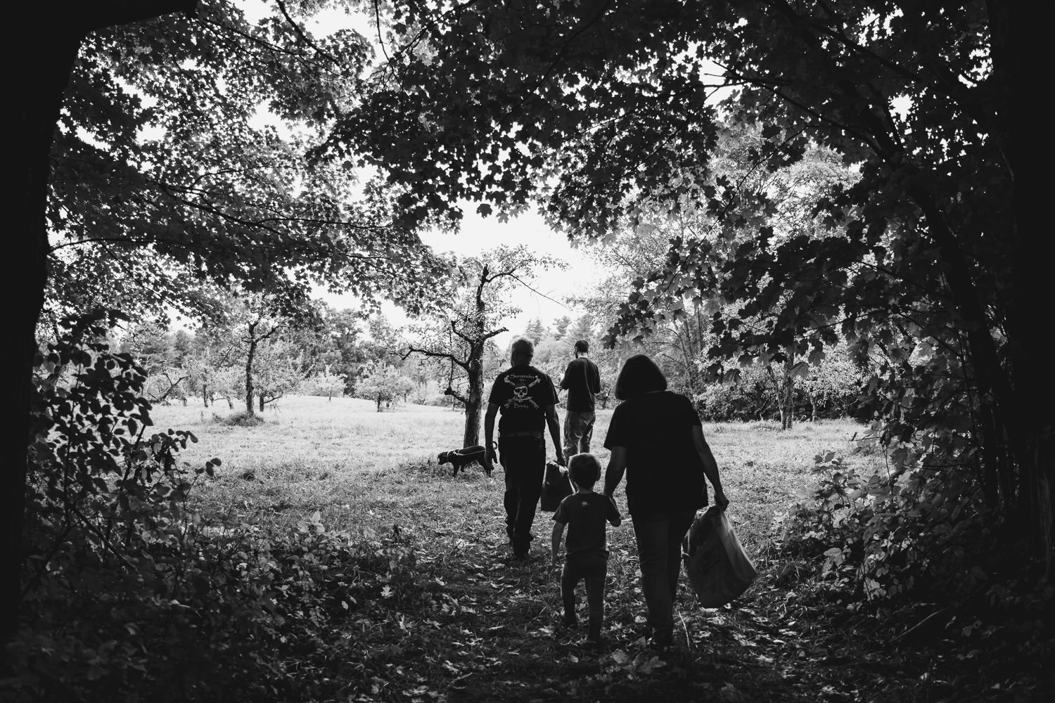 A family walks through the trees of an apple orchard.