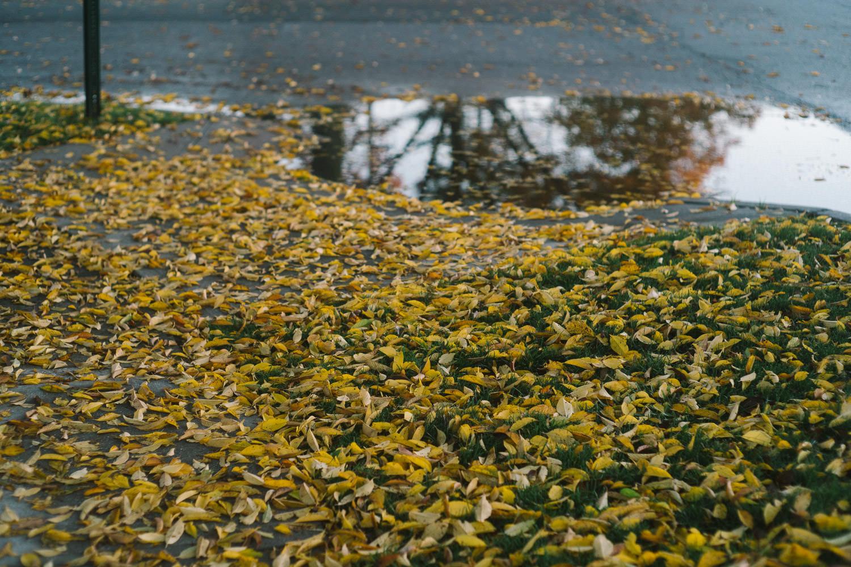 Fallen leaves on the sidewalk.