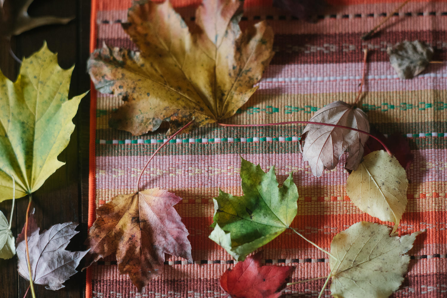 Collected fall leaves.