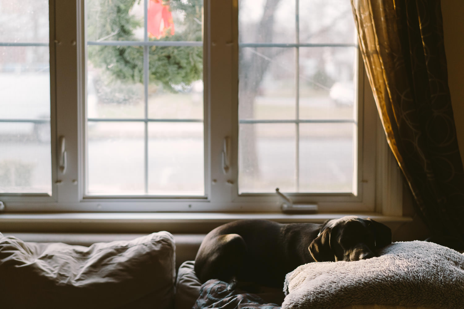 A dog sleeps on the back of a couch.