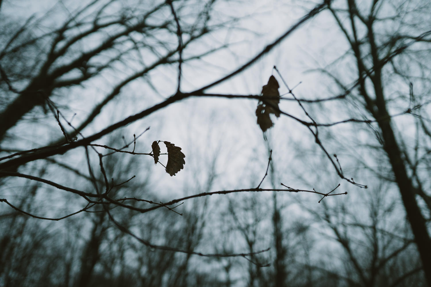 A few dead leaves hang off a bare branch.