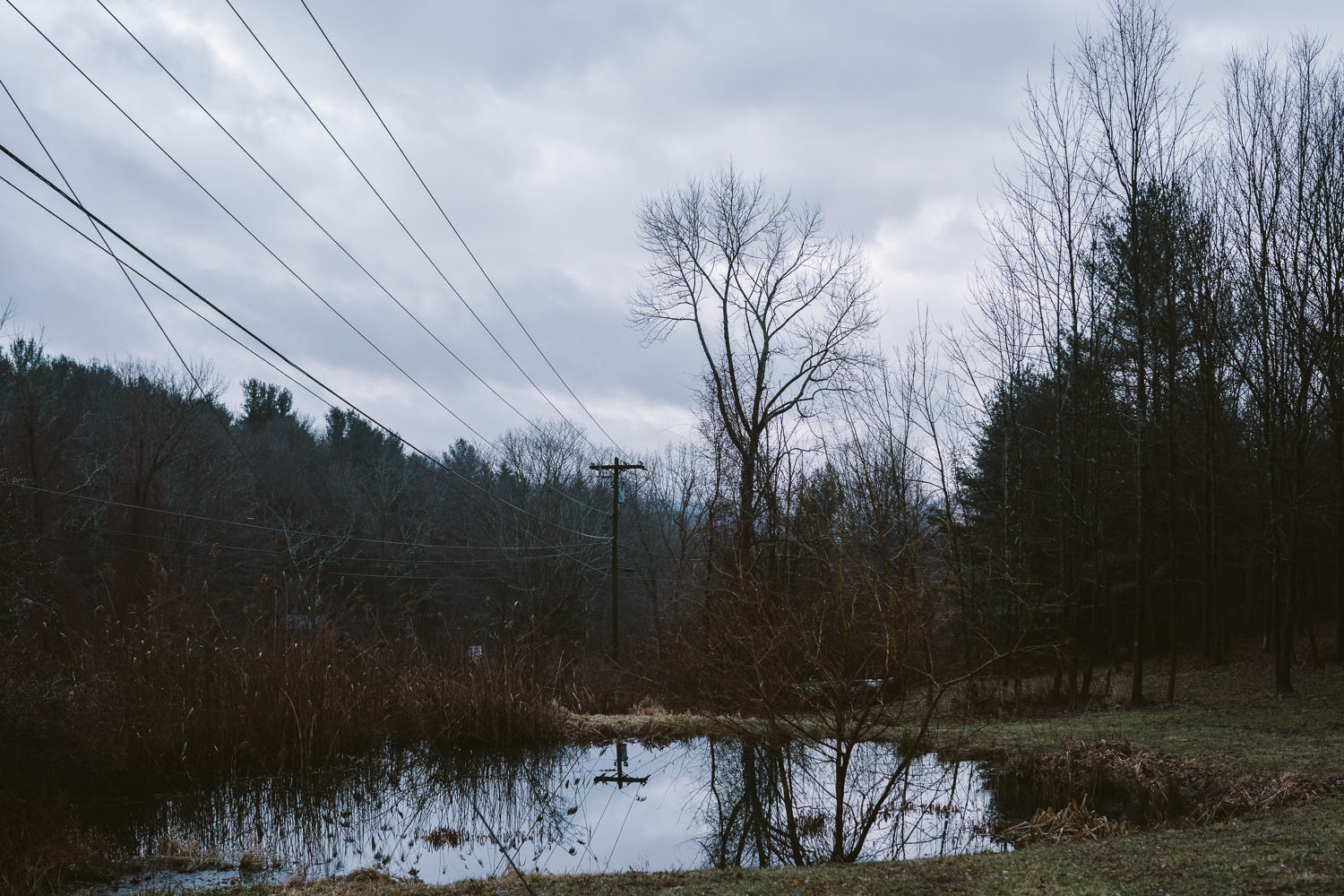 A winter view of a pond in Copake.