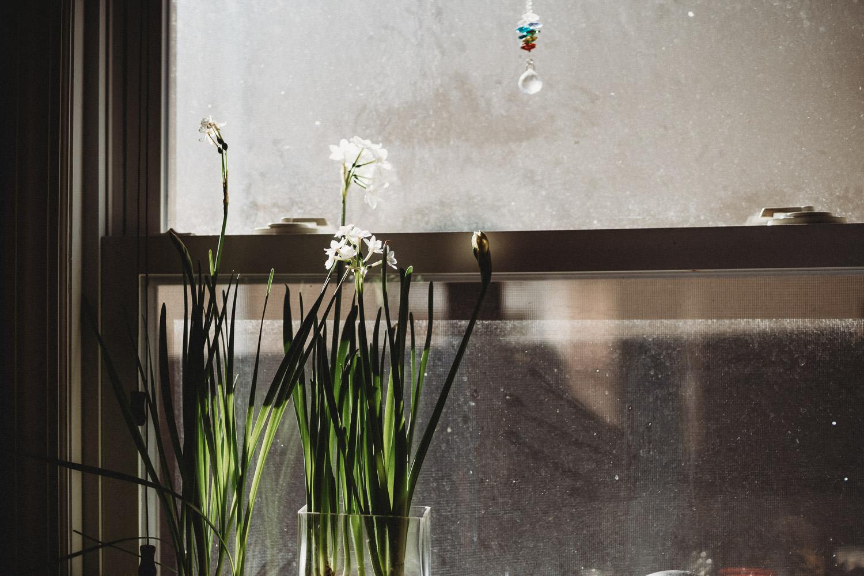 Flowering paperwhites.