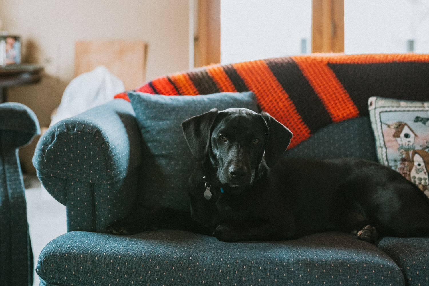 A black lab puppy lies on a couch.