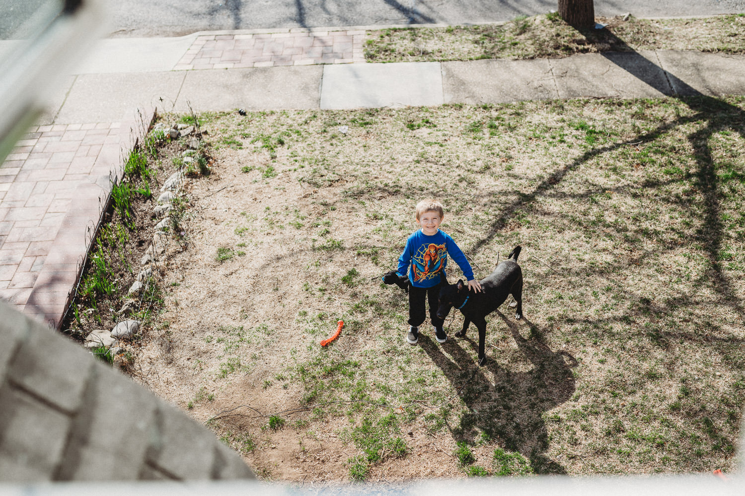 A little boy and his dog play on the lawn.