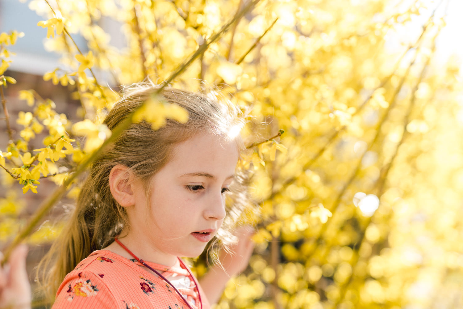 A little girl stands underneath some forsythia.
