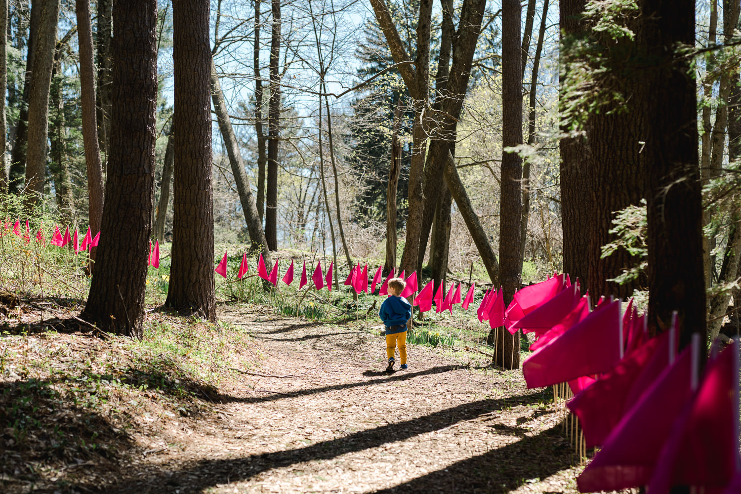 A little boy walks along a trail lined with flags.