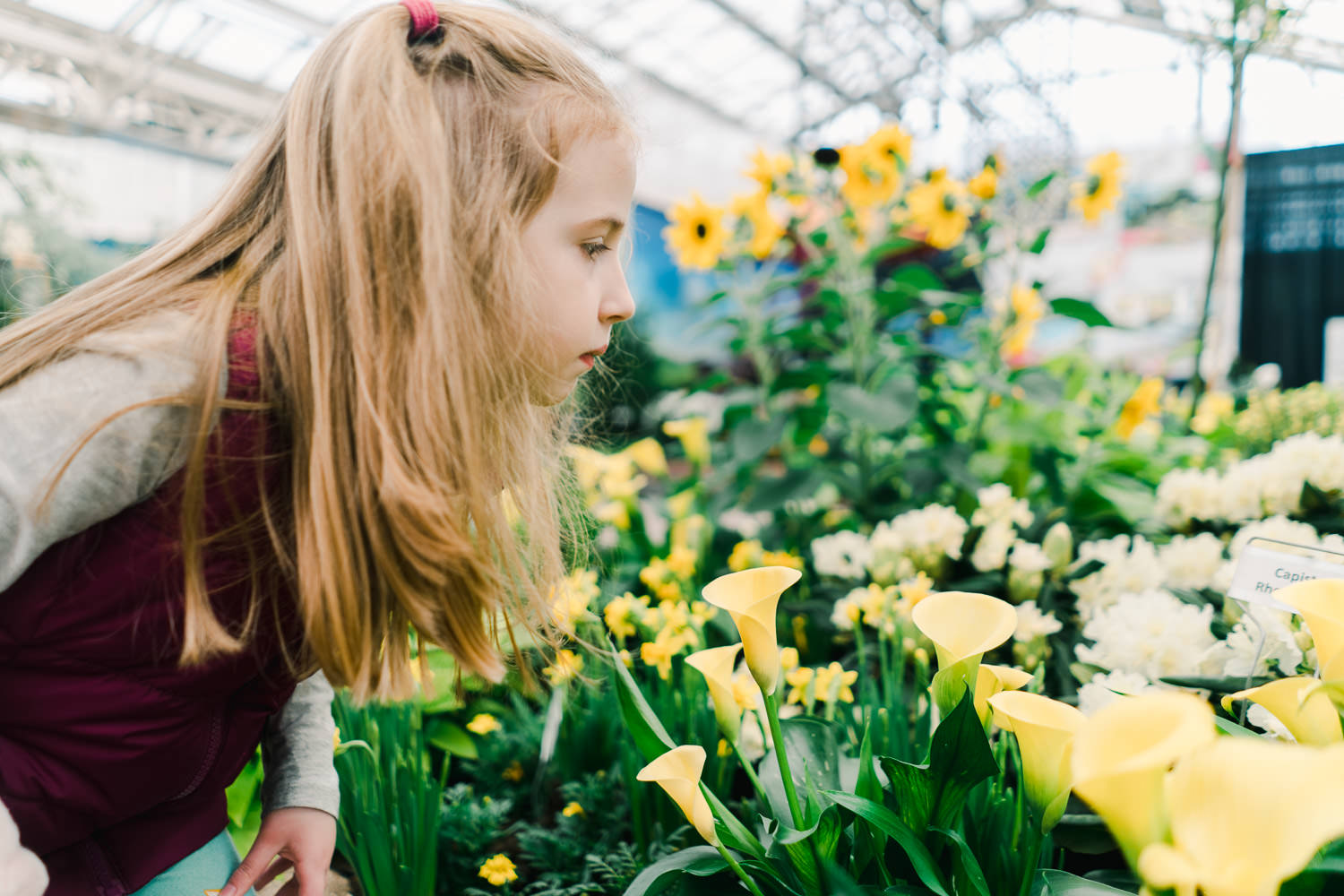 A little girl smells the flowers at the Hicks Spring Flower Show.
