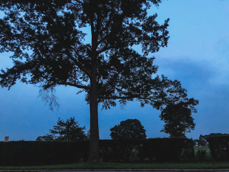 A tree at dusk.