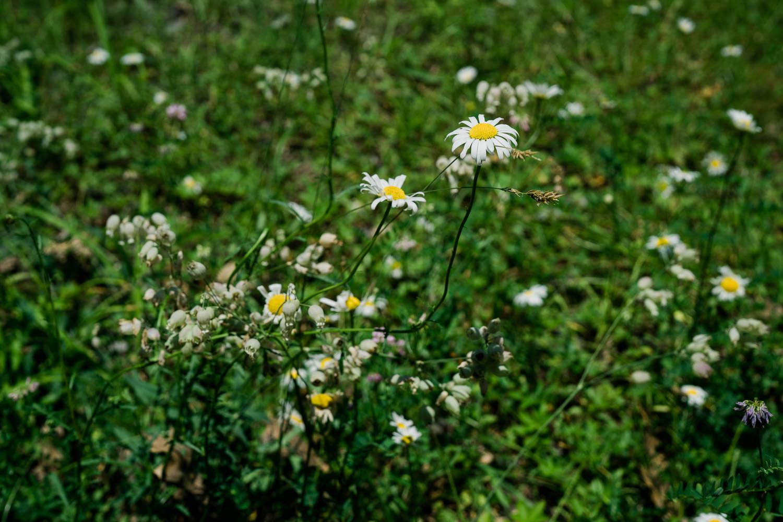 Wildflowers growing.