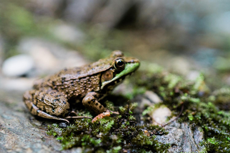 A frog at Bash Bish Falls.