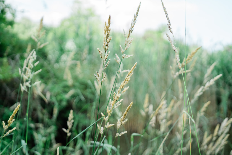 Wild grasses.