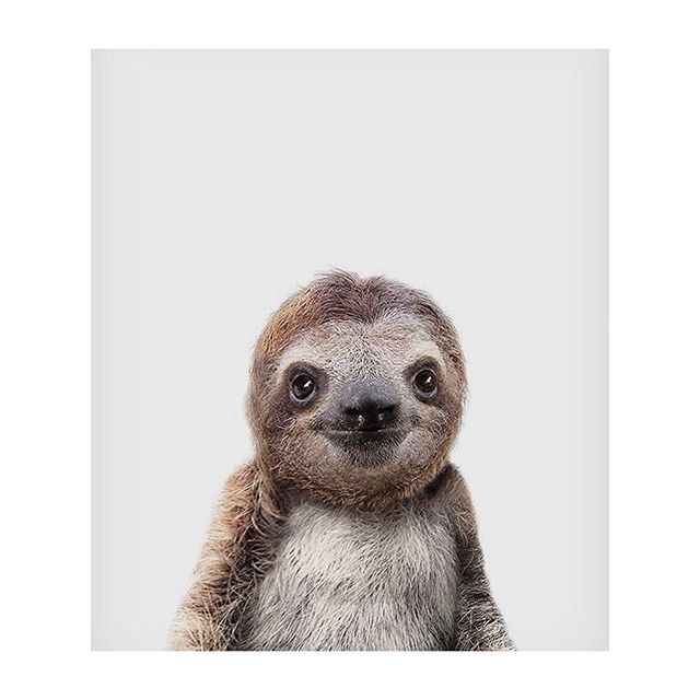 Smile. It's Friday ♥️ #BabySloth #Unknown