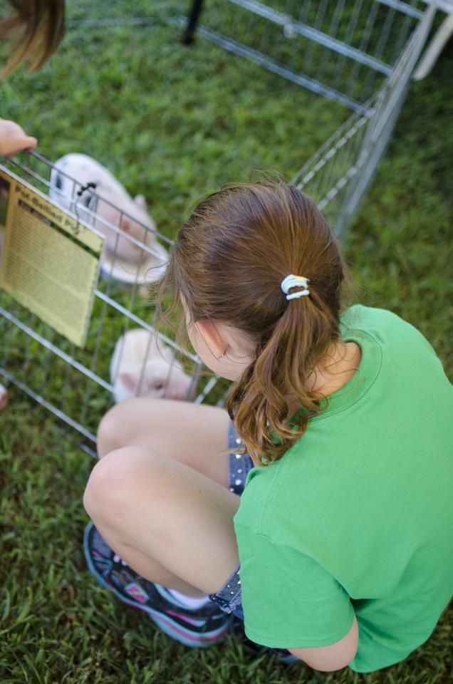 teeny tiny farms petting zoo