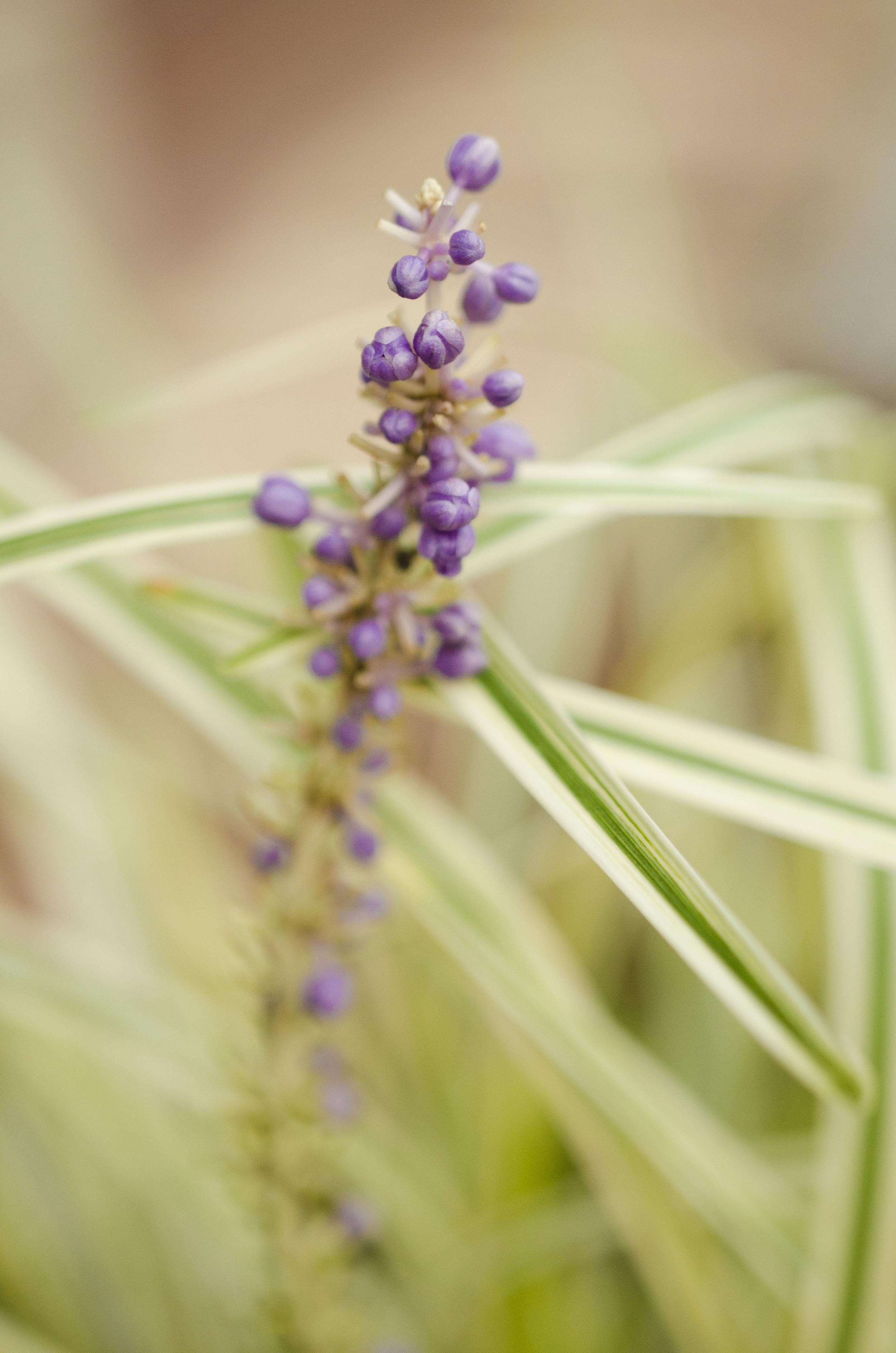 Hampton Roads photographer // purple fliwer