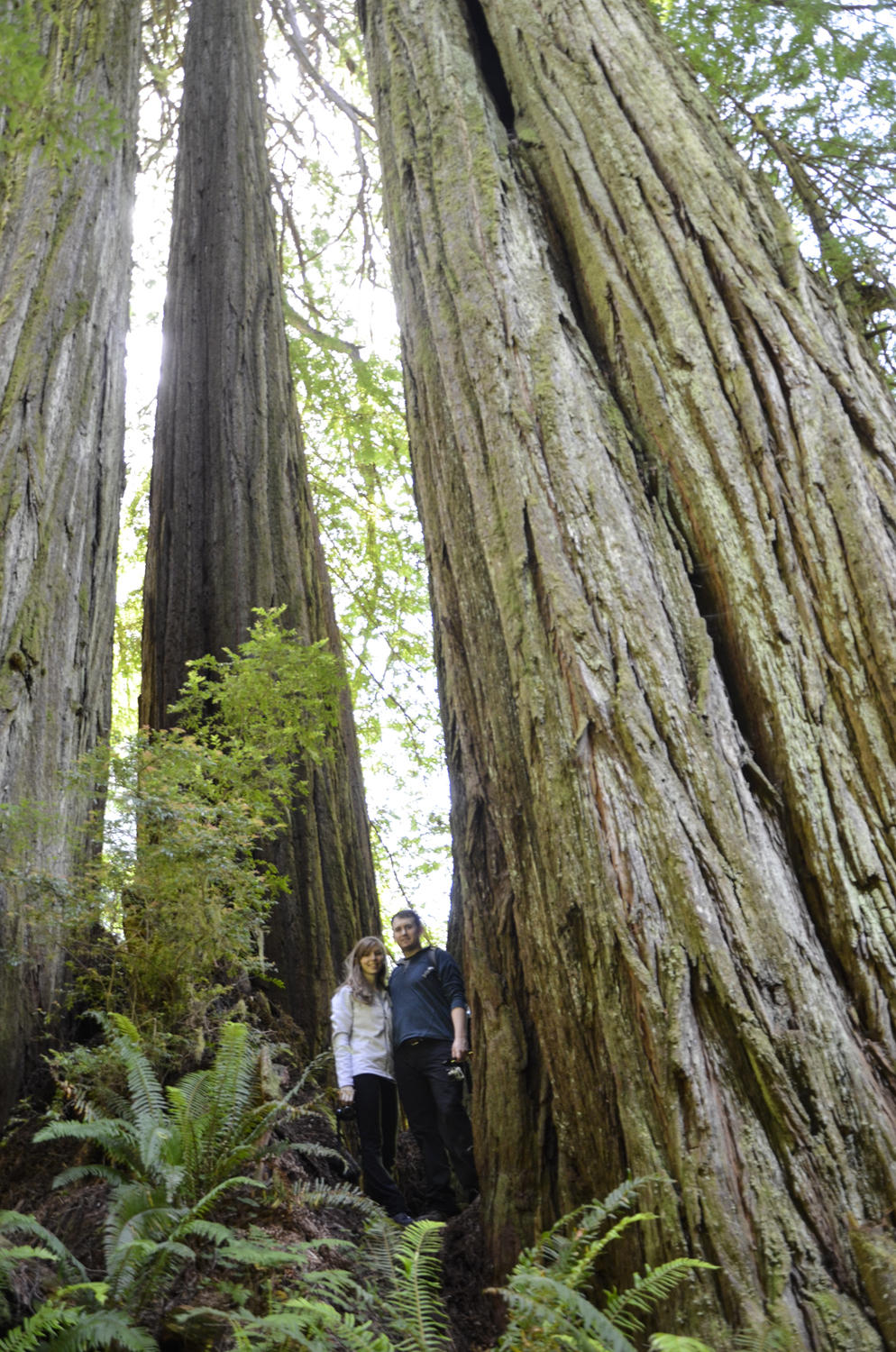 California Redwoods in Crescent City | Maria Grace Photography