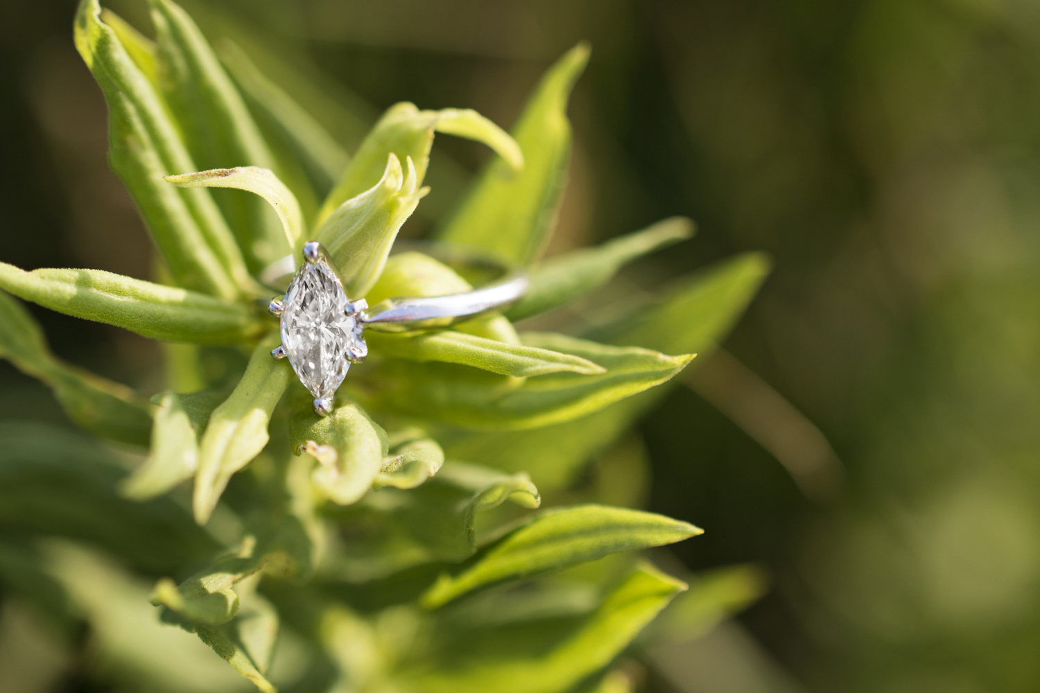 Ring shot on greenery during engagement session