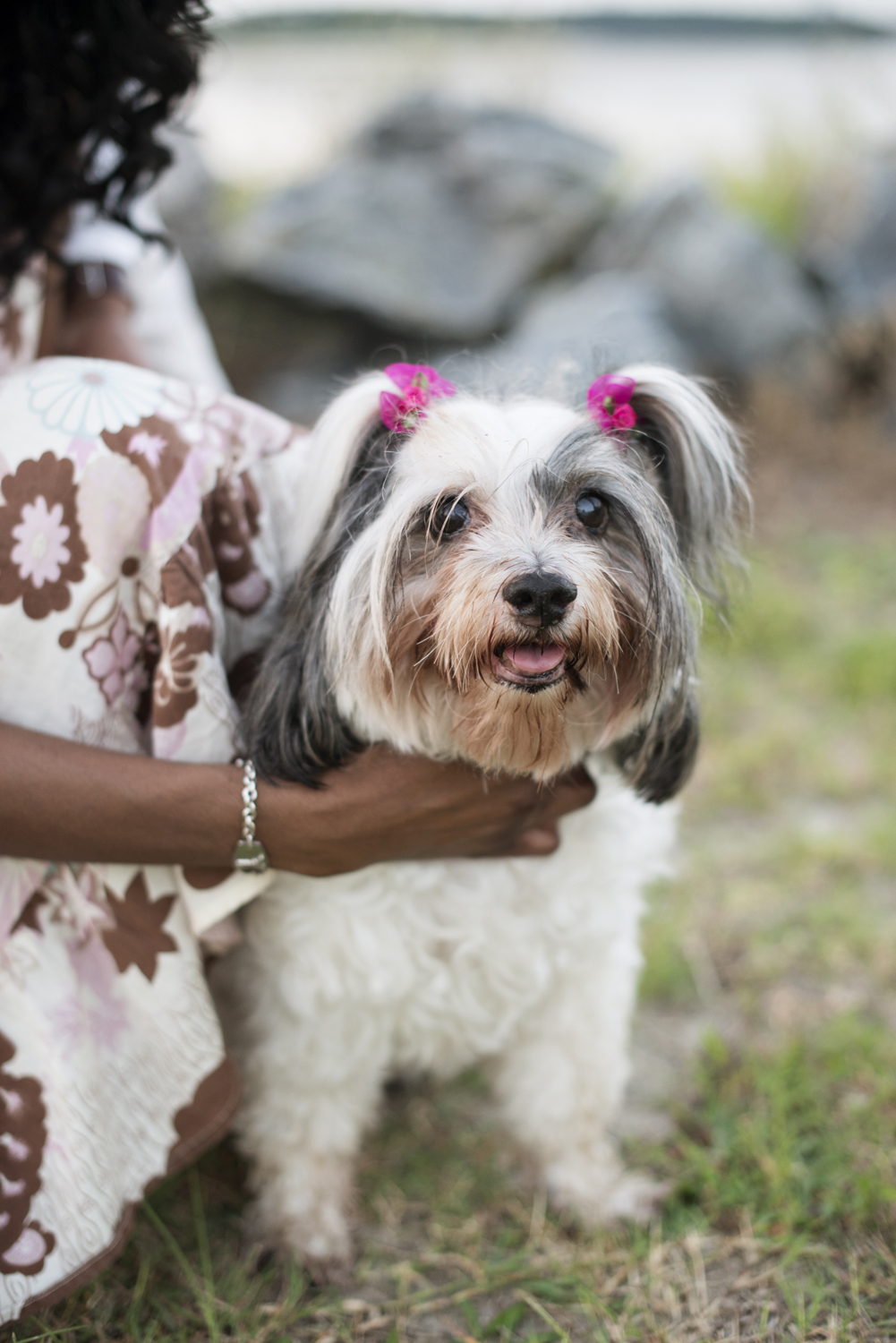 Puppy with pink hairbows at Sunrise engagement portraits at East Beach in Norfolk, Virginia