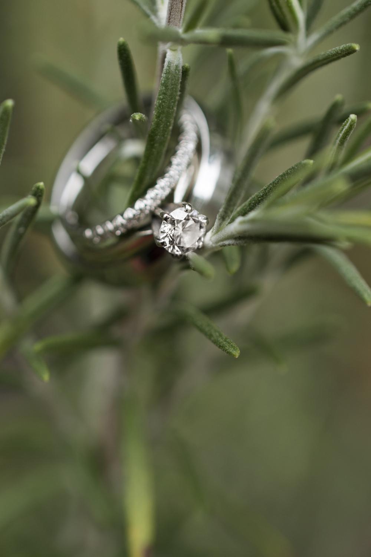 Wedding rings on a fern