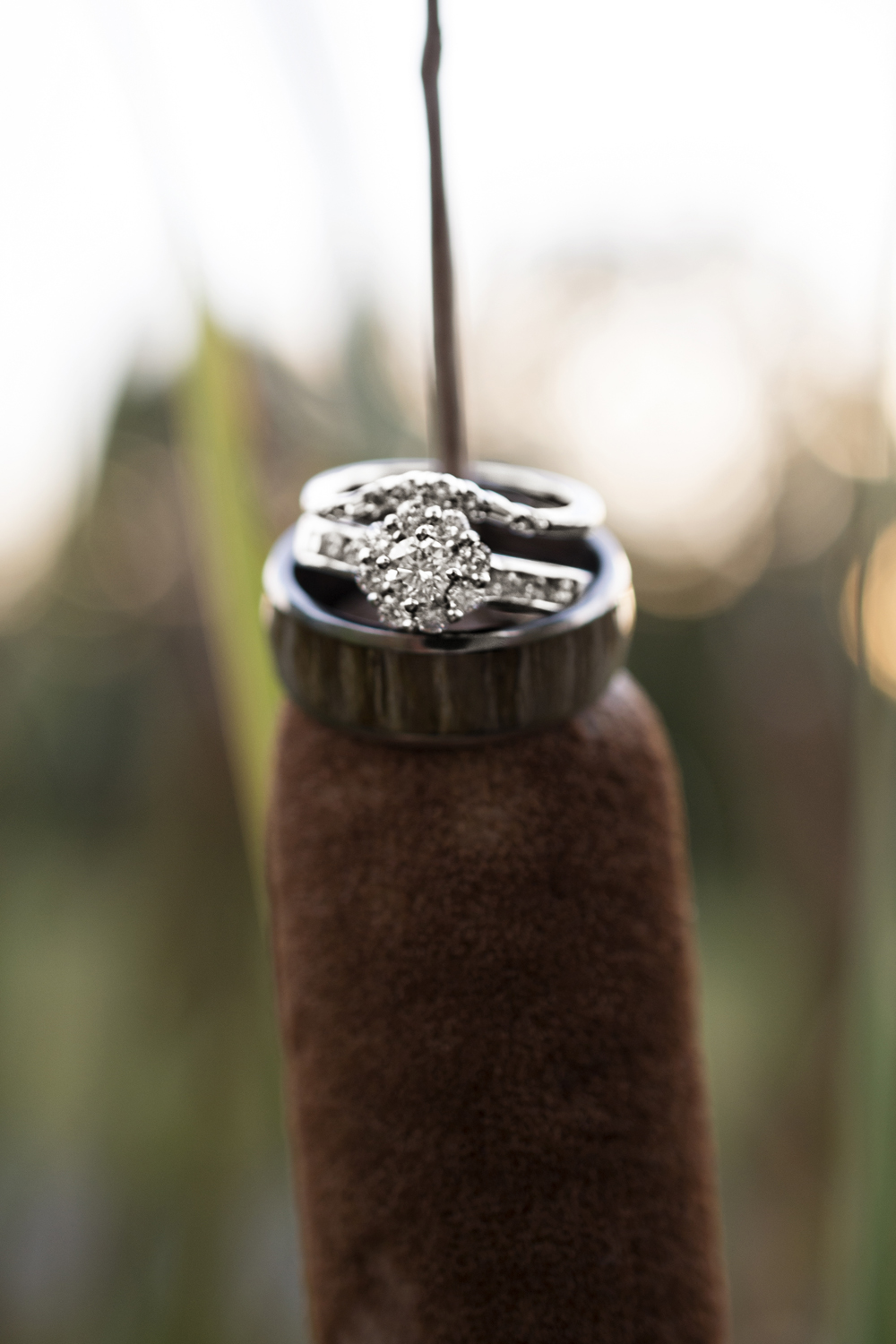 Ring picture on a cattail outside