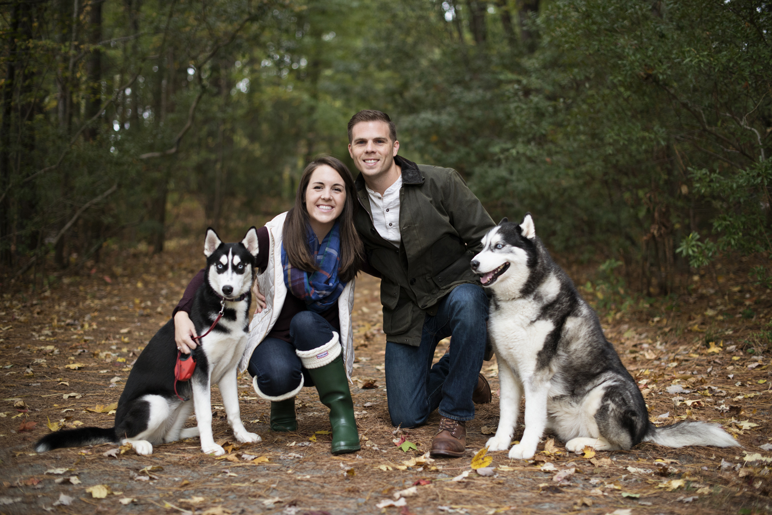 Christmas card pictures with husky rescue dogs