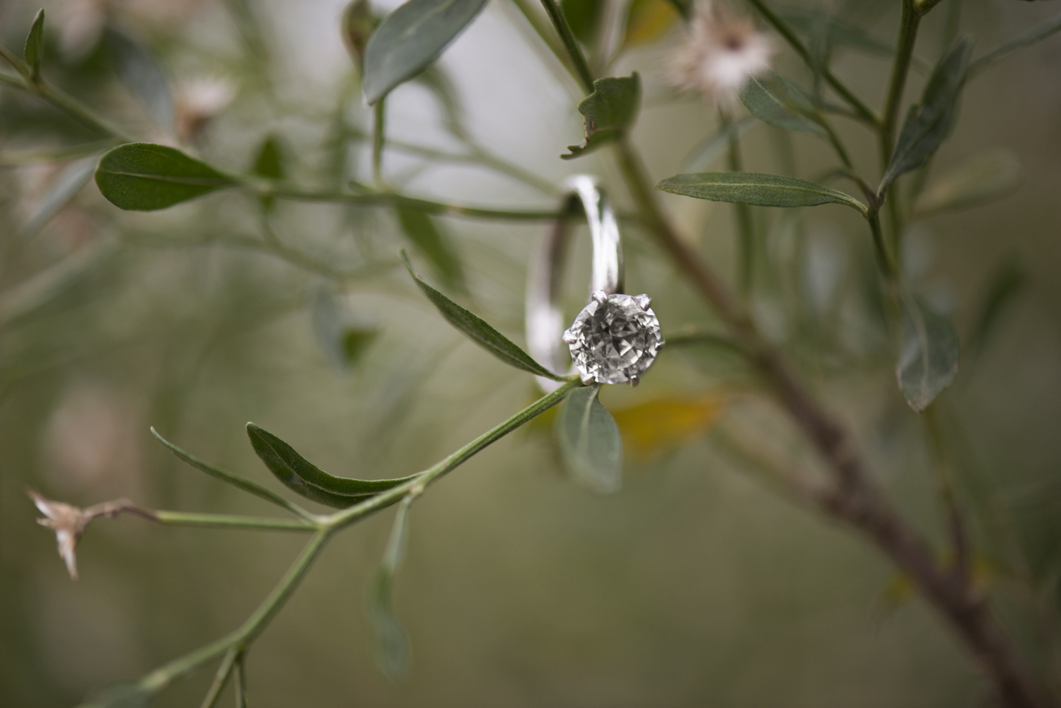 Ring shot hanging in green trees