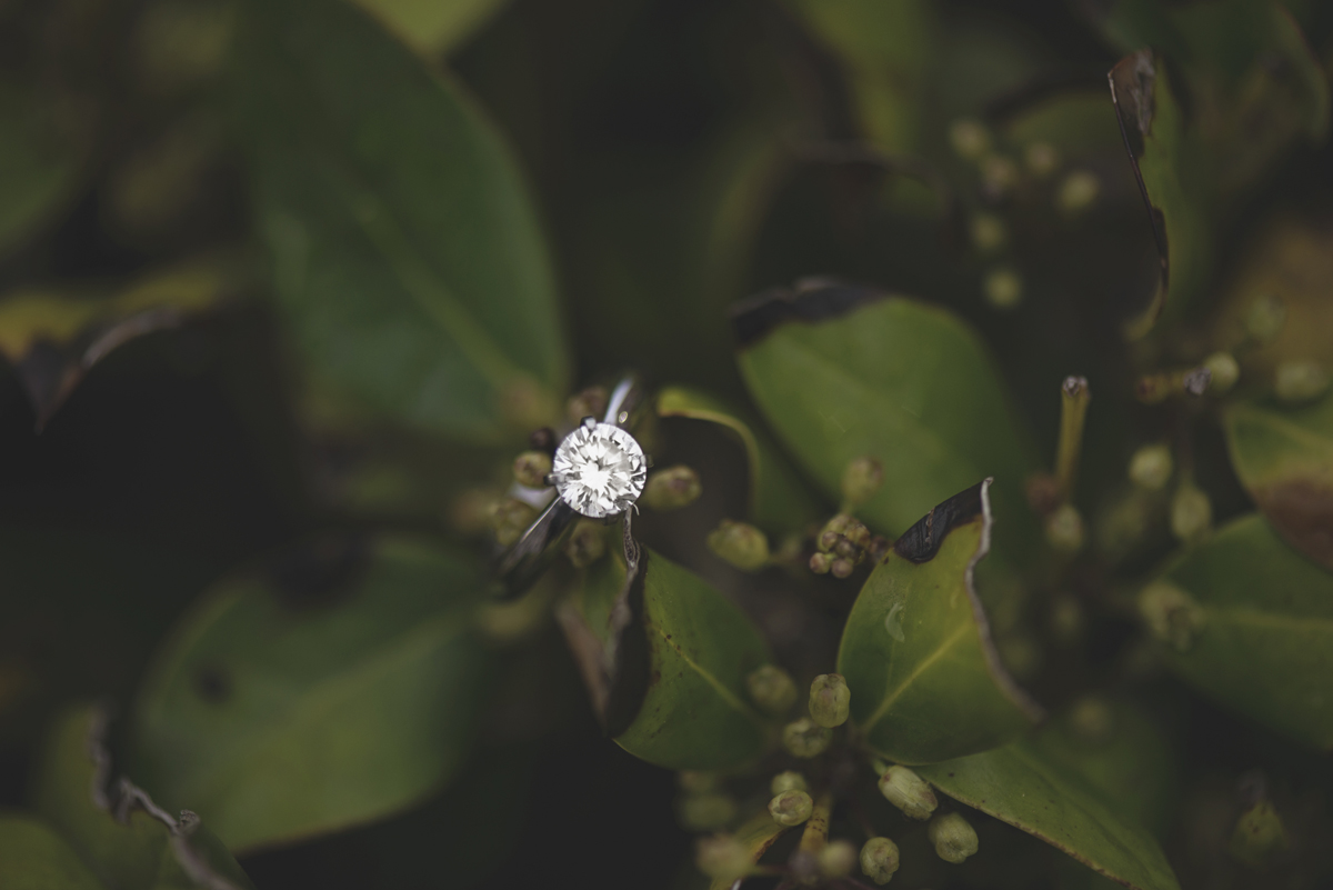 Ring shot in bushes | Macro photography