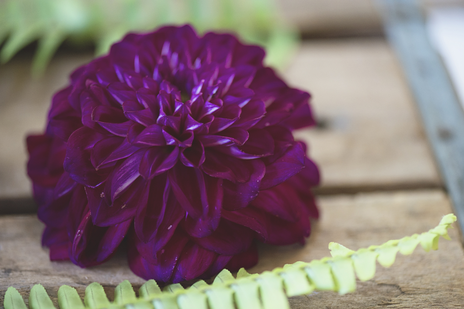 How to Choose the Perfect Fall Wedding Flowers | Purple dahlia