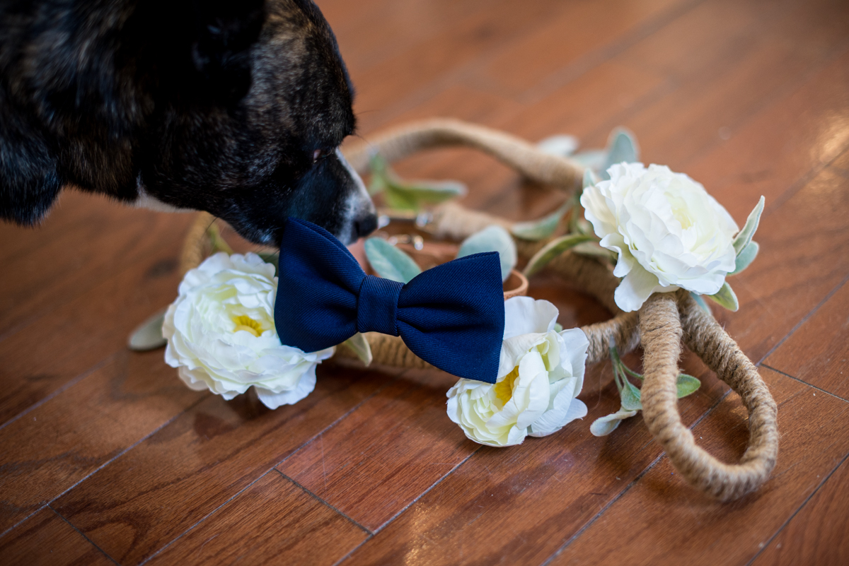 Minimalist White and Green Summer Wedding |Wedding Dog Collar and Leash with Flowers