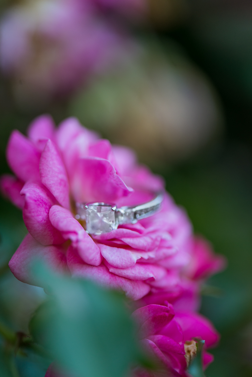 Ring Picture on Pink Flower